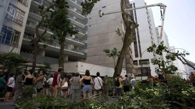 Arvore copacabana
