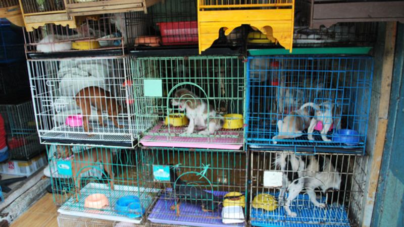 pelo fim do comércio de animais em pet shops
