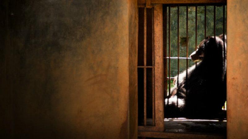 Animais em zoologicos a nocao romantica esconde a realidade gaston lacombe